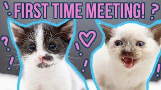 Kitten Quarantine is OVER!!!