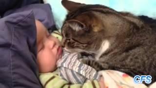 Дети и кошки это так мило видео