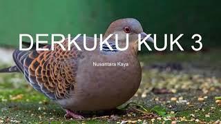 SUARA DERKUKU KUK 3