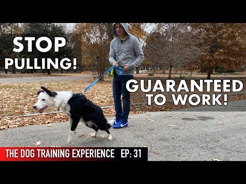 The MOST REALISTIC Leash Dog Training Lesson EVER! STOP ...