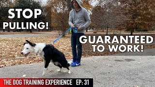 The MOST REALISTIC Leash Dog Training Lesson EVER! STOP PULLING!