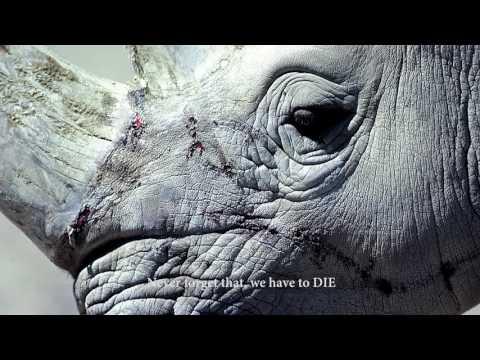 Thực trạng đau lòng - Động vật hoang dã bị săn bắn và tiêu thụ dã man tại Việt Nam