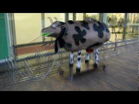 karvė numeta svorio mano svorio metimas įstrigo
