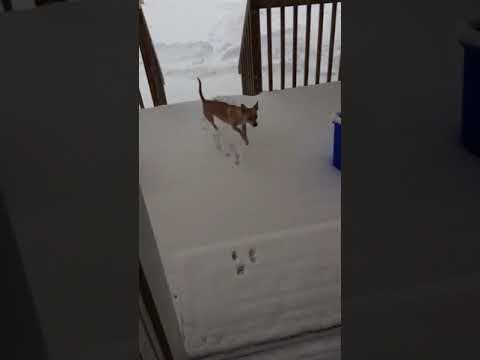 Δεν του άρεσε το χιόνι...!