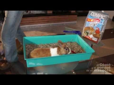 TRUCOS Y CONSEJOS - El mejor lecho para tu mascota