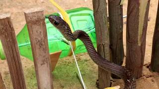 Easy Snake Trap - Fantastic Snake Trap Technology make from plastic bottle