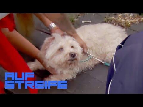 Hundesitterin panisch: Die Hunde wurden gestohlen!   Auf Streife   SAT.1 TV