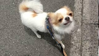 犬の幼稚園 ショーンくんとトレーニング   Kholo.pk