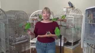 Ginger's Parrots the Movie - Trailer