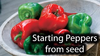 Growing Peppers from seed indoors #1