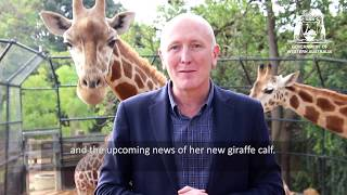 Special Update for World Giraffe Day