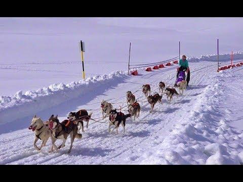 20.  Internationales Schlittenhunderennen in Sportgastein 2019 _ 4 K