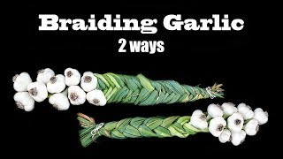 2 Ways To Braid Garlic