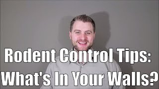 Rodent Control Tips: What's In My Walls?