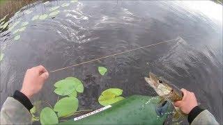 Ловля щуки на реке луга осенью