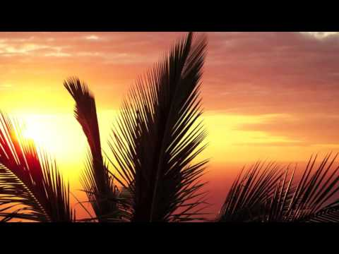 Sunlounger || Another Day On The Terrace Full Album || Downtempo Version