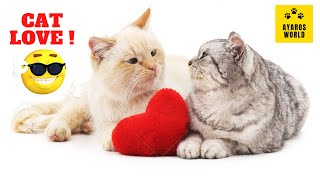 Cute and funny cat videos -Tik Tok #20