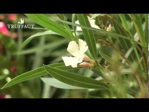 Papilloma vescicale ecografia