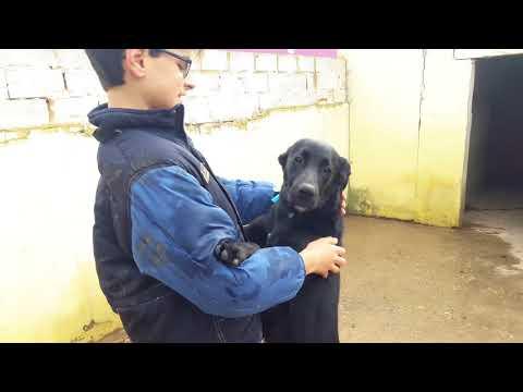 - Tierhilfe Odena e.V.