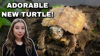 I Got An Adorable RARE Turtle! (...And Now I'm Getting Rid Of It?)