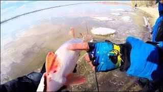 А щука то с СЮРПРИЗОМ!.. Рыбалка на спиннинг весной по мутной воде [Sibiryak007]