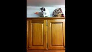 animale faza comica pisica pe dulap