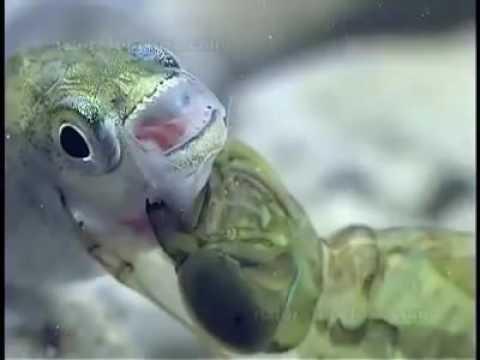 Cum să tratezi viermii la viței