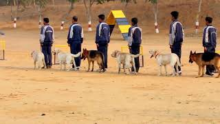 India Police Dogs Training Barmer. Mobile Call 7568350100