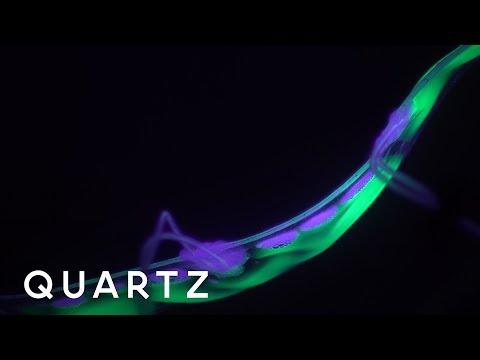 Revolutionary Robotic Eel Designed to Explore the Ocean
