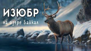 По следам байкальского изюбра (С чистого листа)