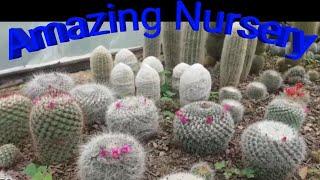Flower Nursery - 免费在线视频最佳电影电视节目- CNClips Net