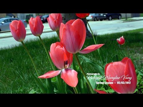 RWV: 2017 Spring Season (Shot with Sony FDRAX53)