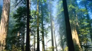 Ebiet G Ade   Senandung Pucuk Pucuk Pinus