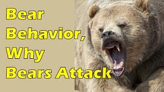 Bear Safety Part 1: Bear Behavior & Why Bears Attack