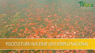 Piscicultura Huilense un Ejemplo Nacional- TvAgro por Juan Gonzalo Angel Restrepo