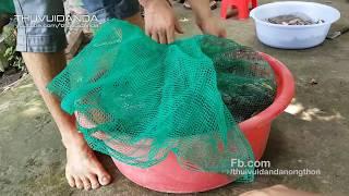 Thăm  Bẫy  Dưới Sông 1 Mình Chắc Vác Không Nổi  l Amazing Fishing Trap in Vietnam