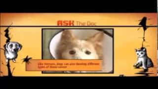 Pets Care ( Blood Cancer in Dogs)
