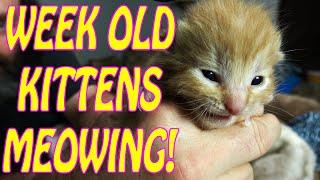 Kittens Eyes Opened! Determining Their Sex
