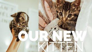 BRINGING HOME OUR KITTEN | ADOPTING CAT | HEATHER FERN