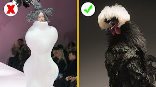 Cute Chickens Conquer The Fashion World In 2018