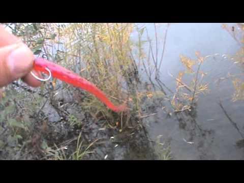 olson pond 10 23 dink bass drop shot ptl finicky tickler