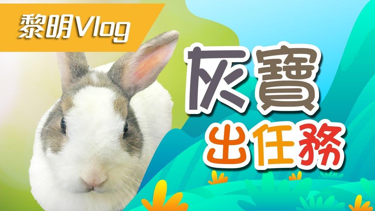 黎明動輔Vol 1:動如脫兔