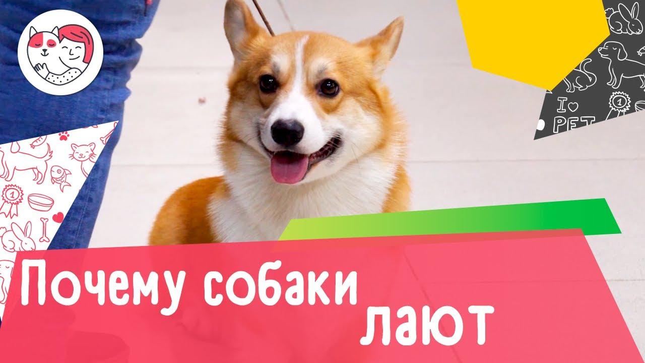 Почему собаки лают: 5 распространенных причин