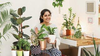 5 Air Purifying Indoor Plants for Styling Your Home|  स्टाइलिश हवा शुद्ध करने वाले पौधे