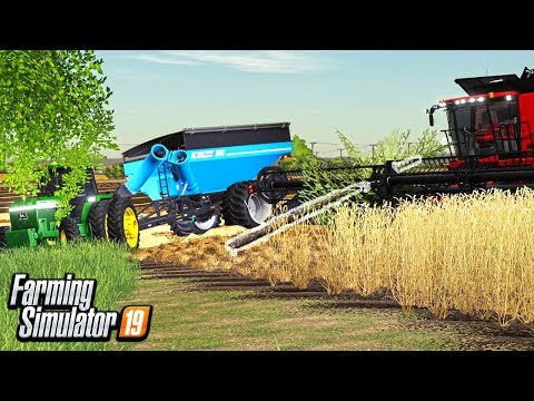 JAMMED A TREE IN OUR COMBINE REEL   HUGE EXPENSE!   FARMING SIMULATOR 19