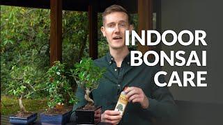 Indoor Bonsai care
