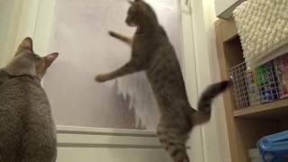 Дискотека для котов