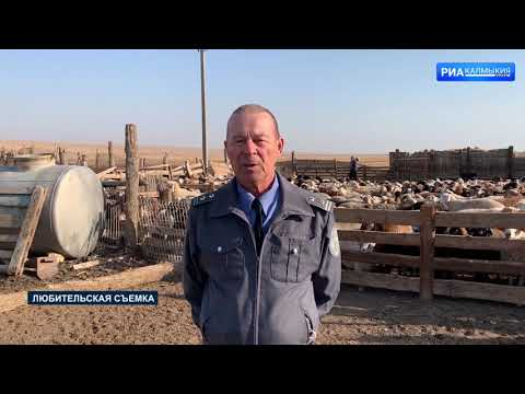 Управлением Россельхознадзора на территории Республики Калмыкия проведены проверки сельхозпредприятий