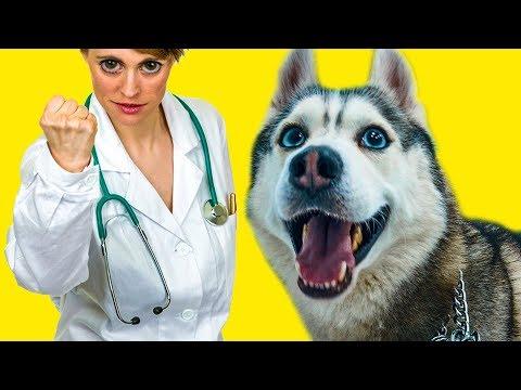 МЕНЯ УВЕЗЛИ В БОЛЬНИЦУ! (Хаски Бандит) Говорящая собака