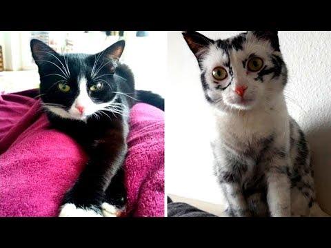 Diese gerettete Katze ändert jeden Tag ihre Fellfarbe